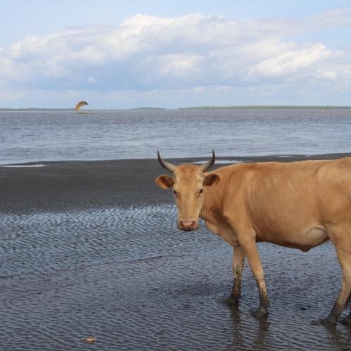 Yeliboya Island